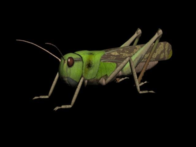 Grasshopper Digital Art by Russ Walker