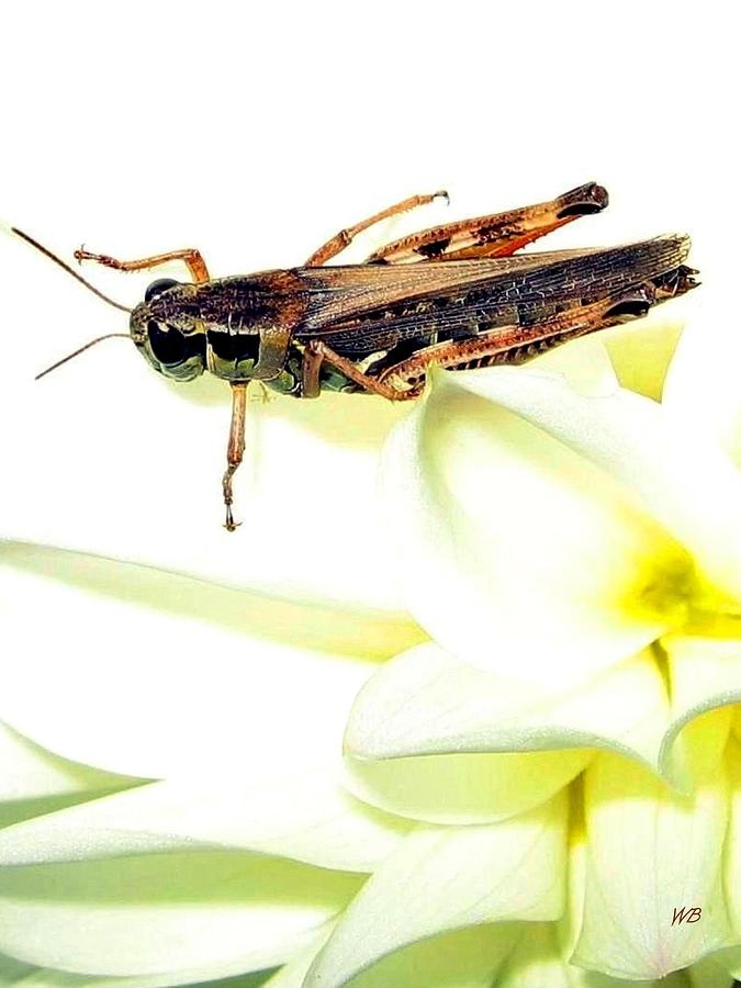 Grasshopper Photograph - Grasshopper by Will Borden