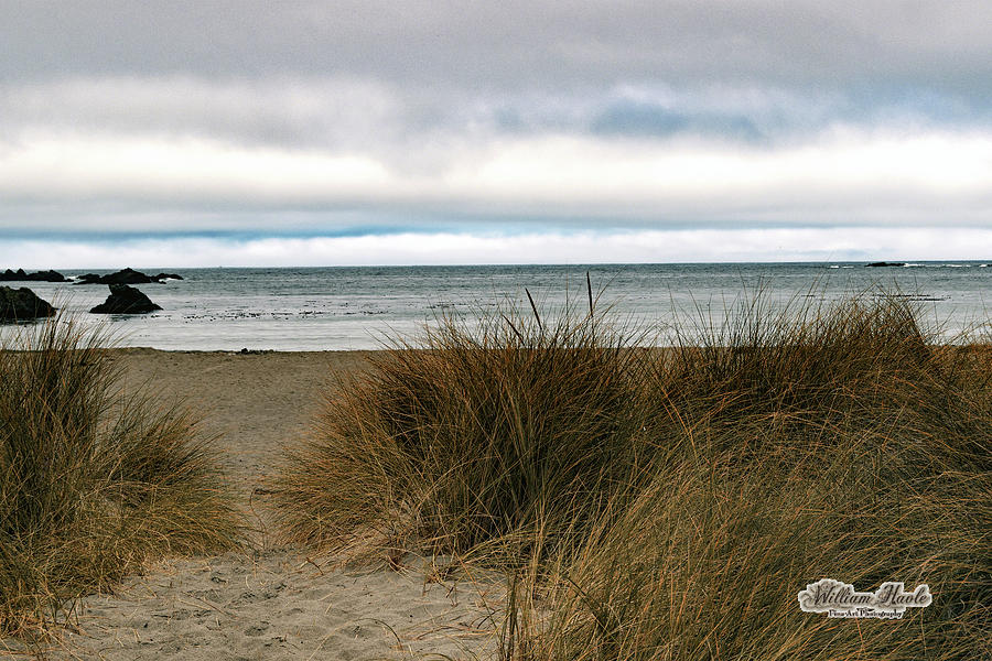 Grassy Beach by William Havle