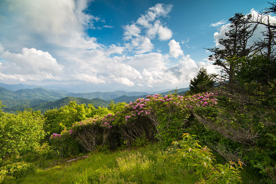 Grassy Ridge Roan Highlands Rhododendrons on the Appalachian Trail by Rick Dunnuck