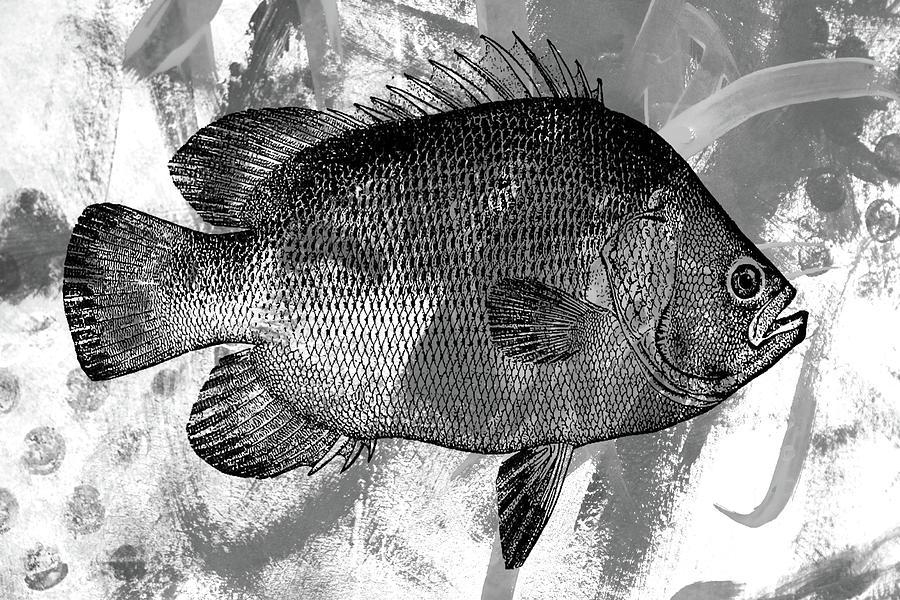 Black And White Fish Digital Art - Gray Fish by Nancy Merkle
