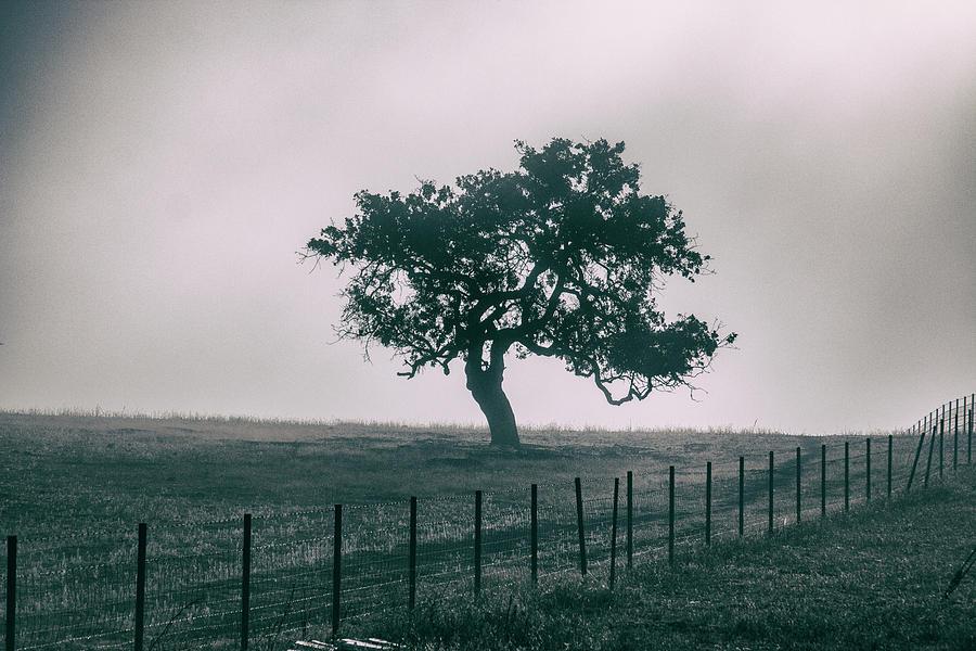 Gray Sky Morning by Mike Trueblood