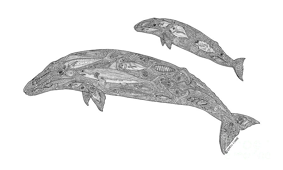 Whale  Drawing - Gray Whale And Calf by Carol Lynne