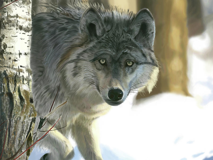 Gray Wolf by Nigel Follett