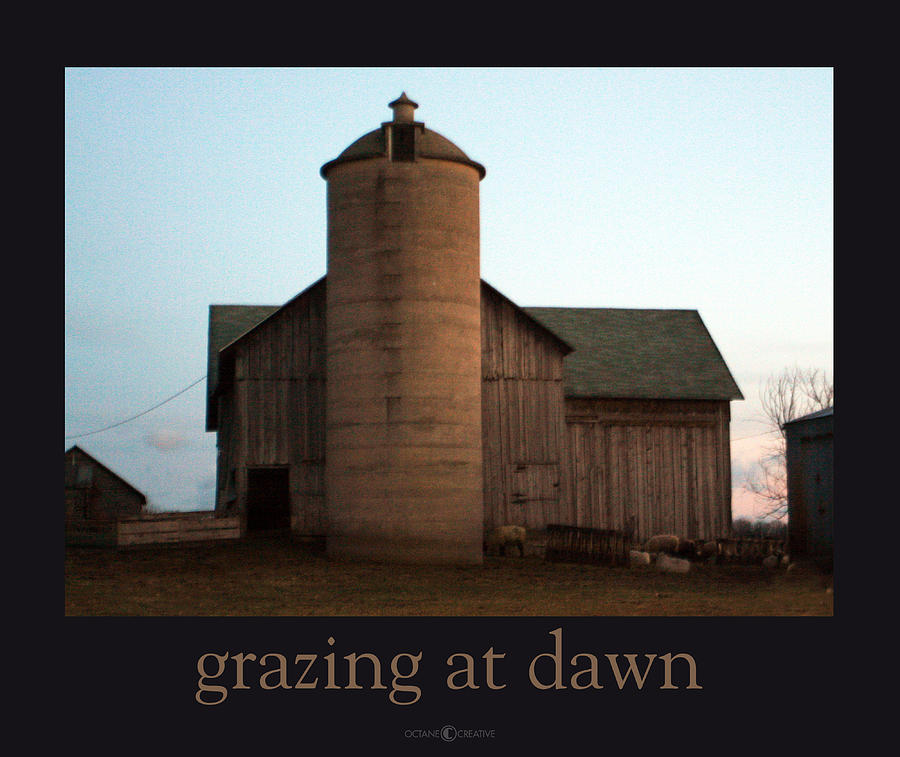 Barn Photograph - Grazing at Dawn by Tim Nyberg