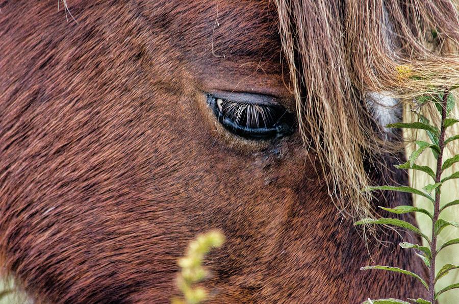 Grazing Close Up by Jennifer Stockman