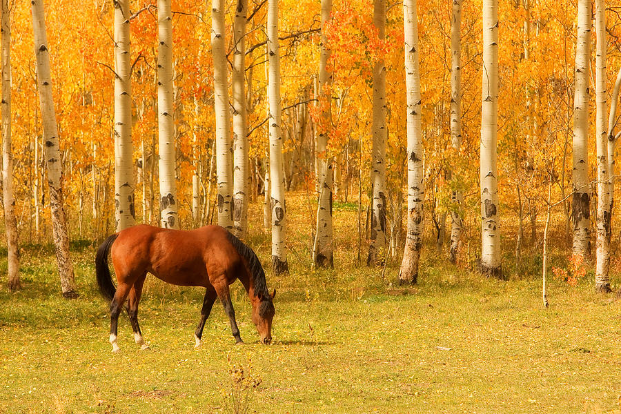 Horse Photograph - Grazing Horse In The Autumn Pasture by James BO Insogna