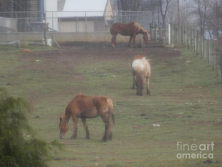 Amish Photograph - Grazing Horses by Christine Clark