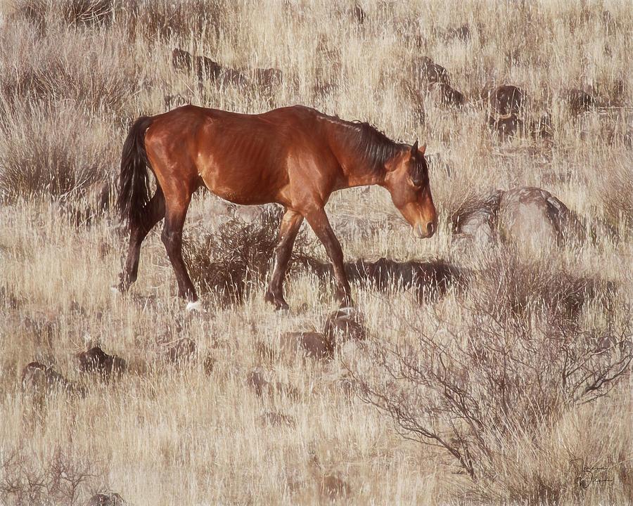 Arizona Photograph - Grazing In The Winter Grass by Teresa Wilson