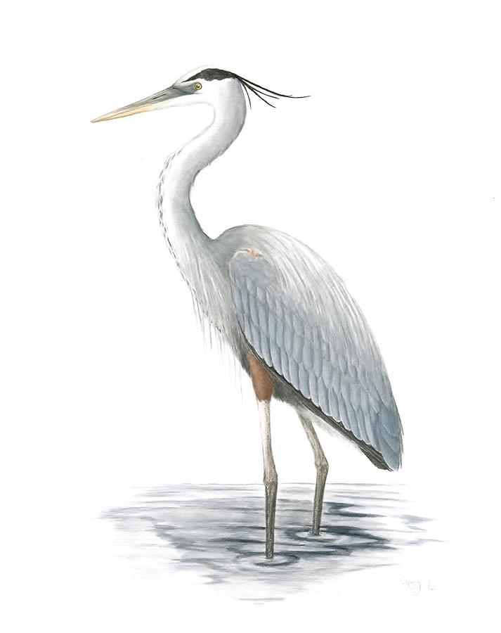 Bird Painting - Great Blue Heron by Anna Bronwyn Foley