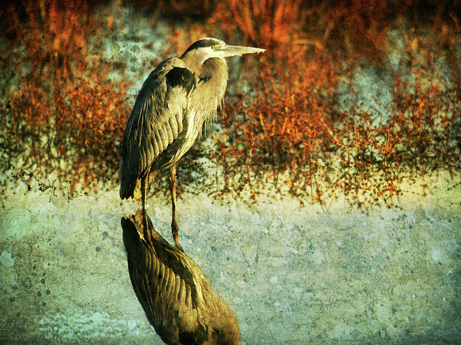 Great Blue Heron Photograph by Guy Crittenden