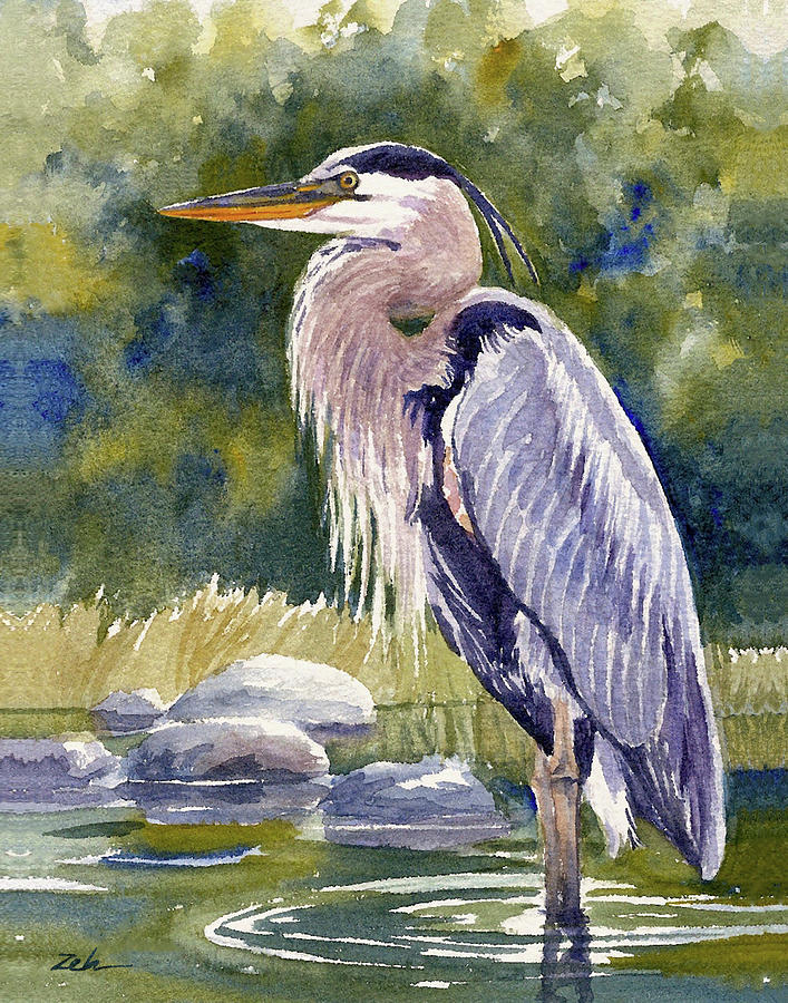 Great Blue Heron in a Stream by Janet Zeh
