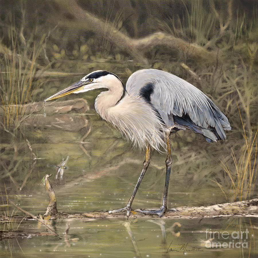 Great Blue Heron Drawing - Great Blue Heron by Laurie Musser