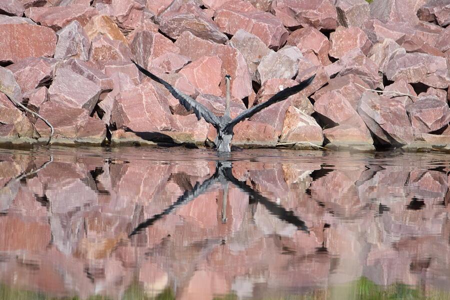 Great Blue Heron Digital Art - Great Blue Heron by Margarethe Binkley