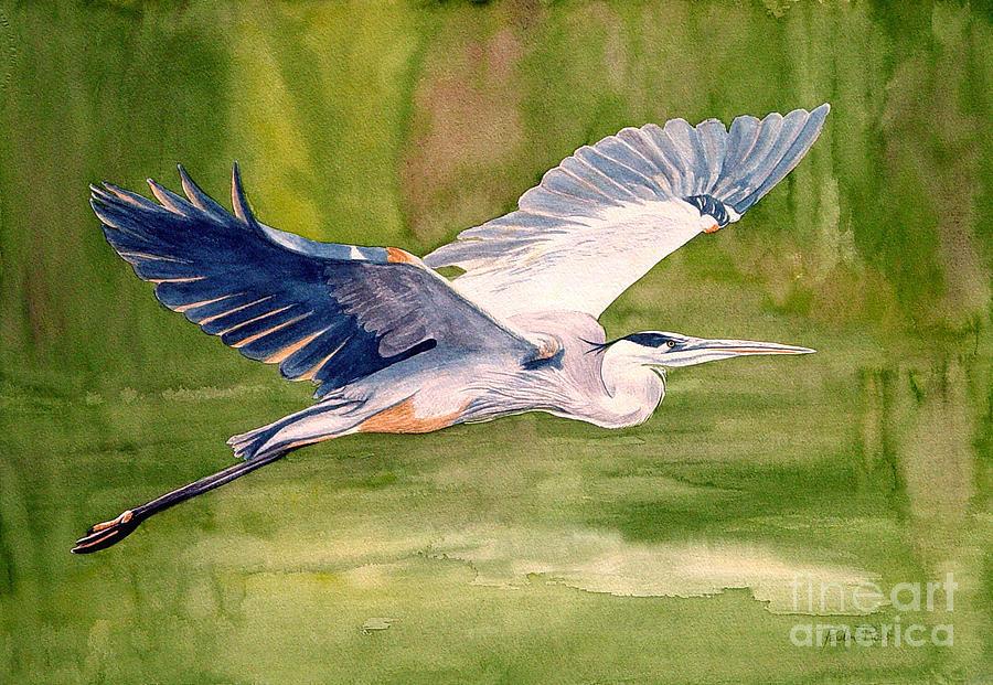 Heron Painting - Great Blue Heron by Pauline Ross