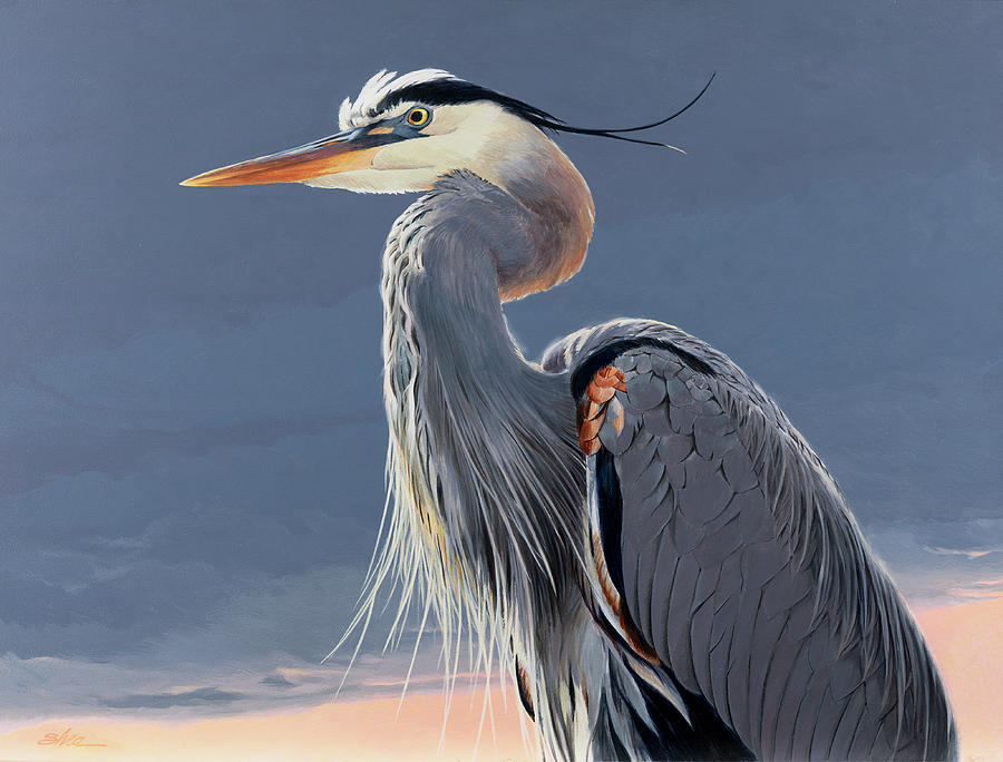 It is an image of Delicate Great Blue Heron Drawing
