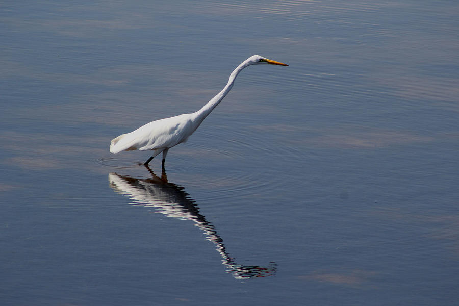 Bird Photograph - Great Egret by April Wietrecki Green