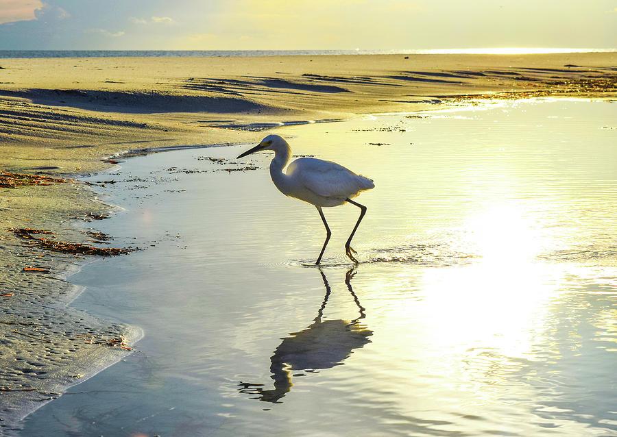 Bird Photograph - Great Egret by Ashleena Valene Taylor