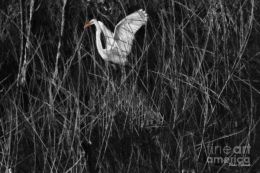 Great Egret Photograph - Great Egret Inthe Marsh by Blake Richards