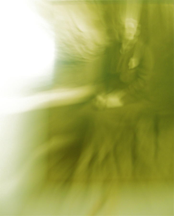 Abstract Photograph - Great Grandmas Ghost by Shelia Howe