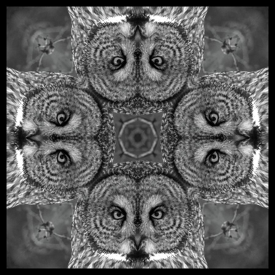 Kaleidoscope Photograph - Great Gray Owl Stare Down by Rhoda Gerig