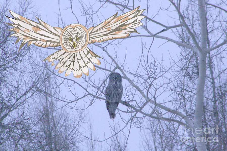 Winter Mixed Media - Great Gray Owl Together by Mary Mikawoz