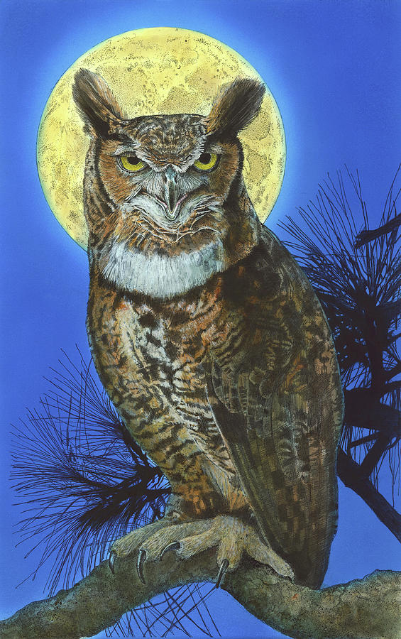 Great Horned Owl 2 by John Dyess