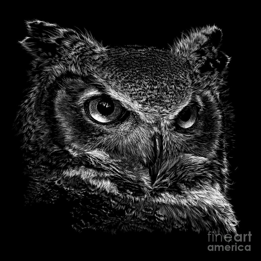 Owl Drawing - Great Horned Owl by Laurie Musser