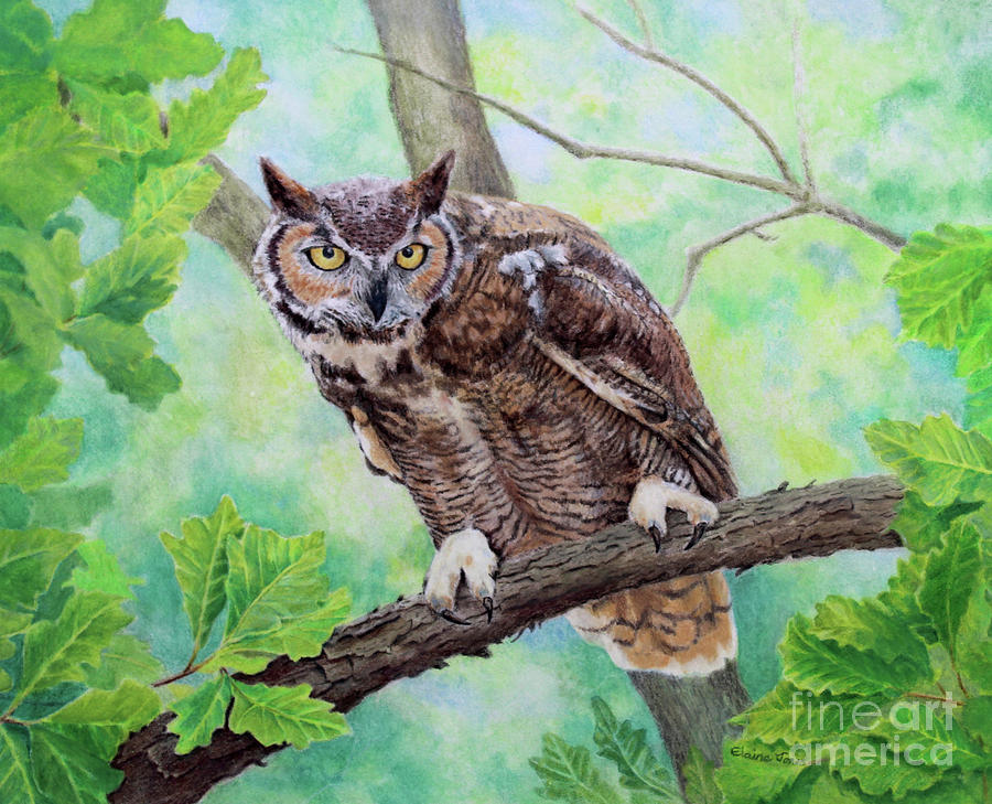 Great Horned Owl Portrait by Elaine Jones