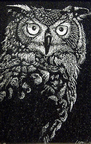 Bird Drawing - Great Horned Owl by Ric Larson