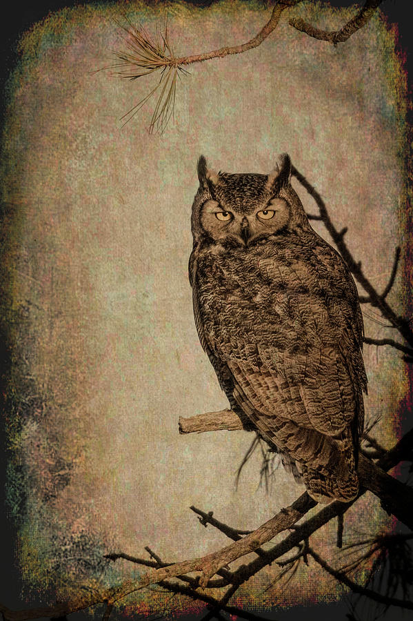 Animals Photograph - Great Horned Owl With Textures by Dawn Key