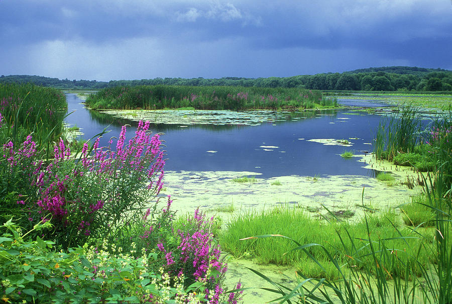 Concord Photograph - Great Meadows National Wildlife Refuge by John Burk