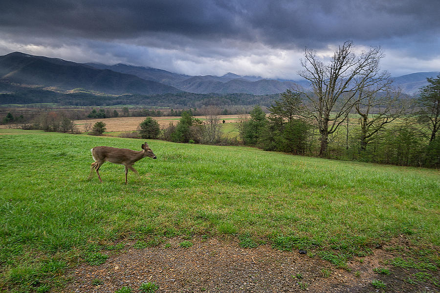 Great Smoky Mountains National Park Photograph - Great Smoky Mountain National Park - Cades Cove Doe  by Jason Penland