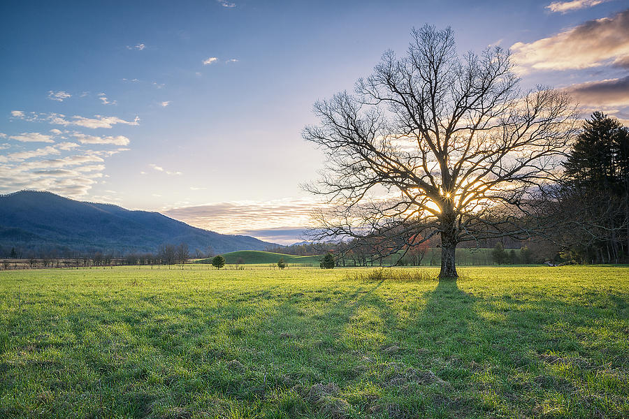 Trees Photograph - Great Smoky Mountains National Park - Springtime  by Jason Penland