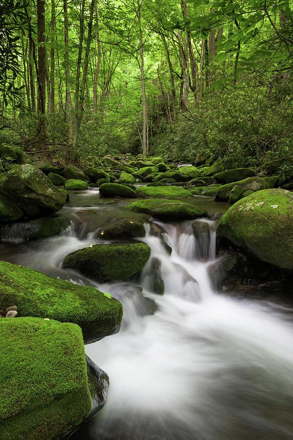 Appalachian Mountains Photograph - Great Smoky Mountains Roaring Fork by Mark VanDyke