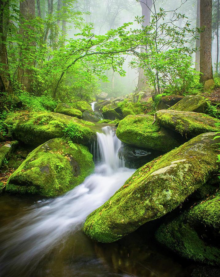 Waterfall Photograph - Great Smoky Mountains TN Misty Roaring Fork by Robert Stephens