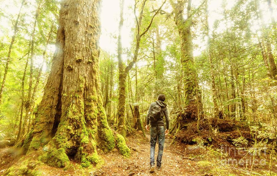 Nature Photograph - Great Tasmania Short Walks by Jorgo Photography - Wall Art Gallery