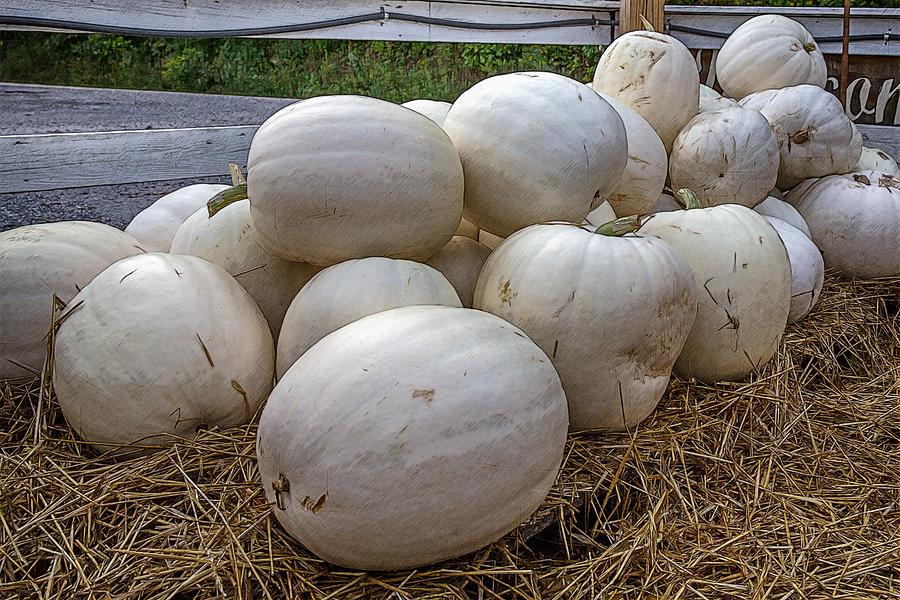 Great White Pumpkins Digital Art