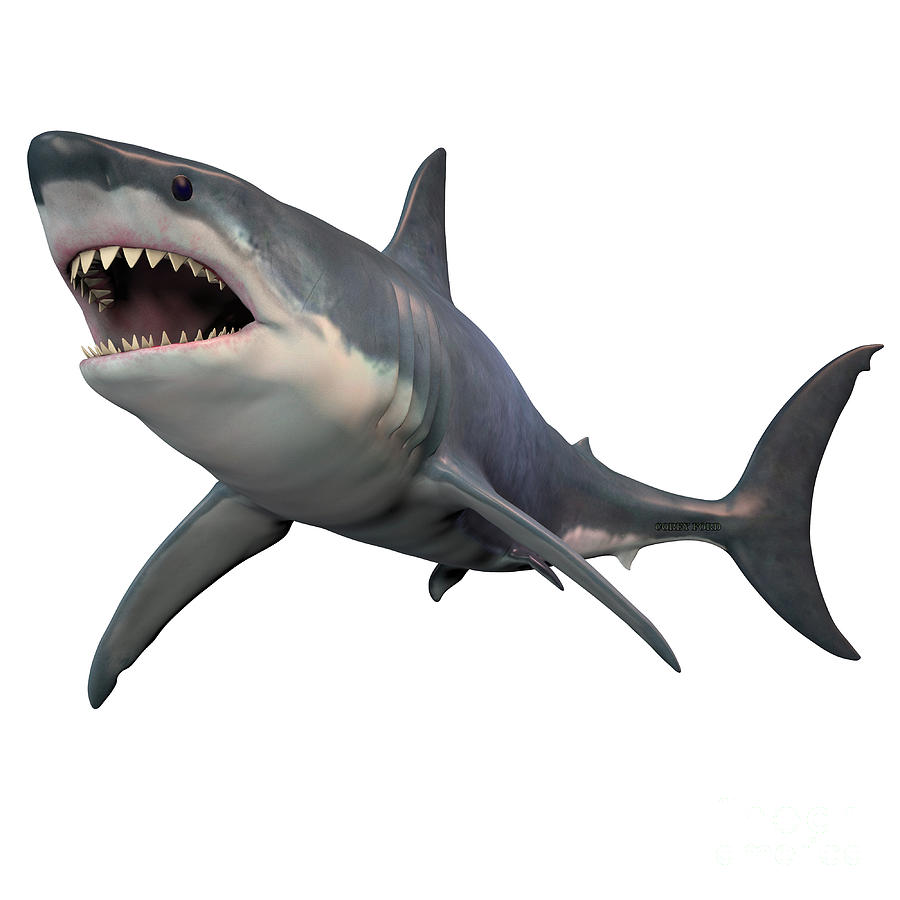 Great White Shark Isolated Painting by Corey Ford  Great White Shark Painting