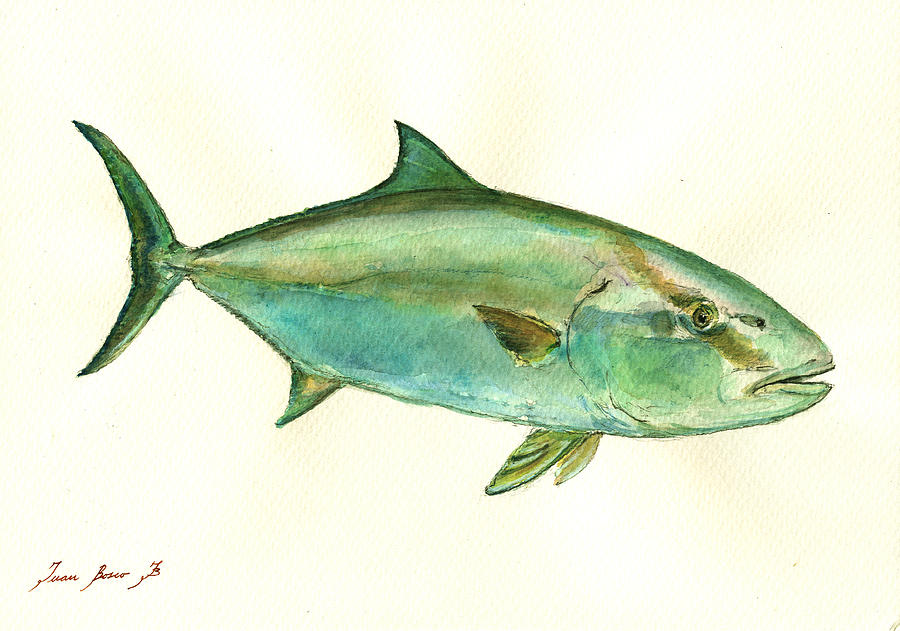Common Dentex Painting - Greater Amberjack Fish by Juan  Bosco