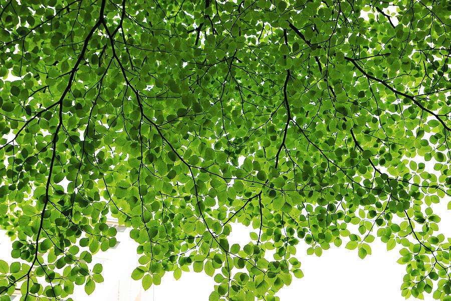 Green Photograph - Green #001 by Phoresto Kim