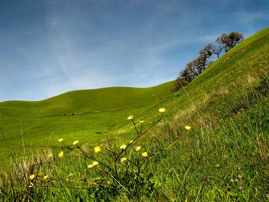 Landscape Photograph - Green 4 Flowers by Karen  W Meyer