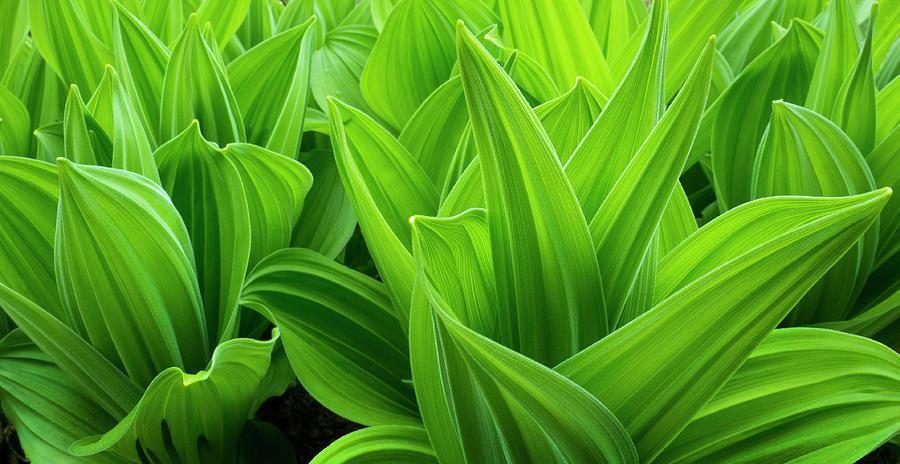 Green by Adrian Borda