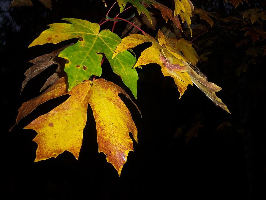 Autumn Photograph - Green And Yellow by Ken Day