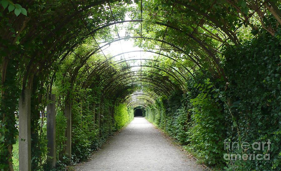 Arbor Photograph - Green Arbor Of Mirabell Garden by Carol Groenen