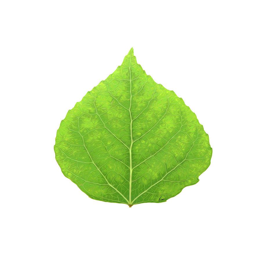 Aspen Digital Art - Green Aspen Leaf #11 by Agustin Goba