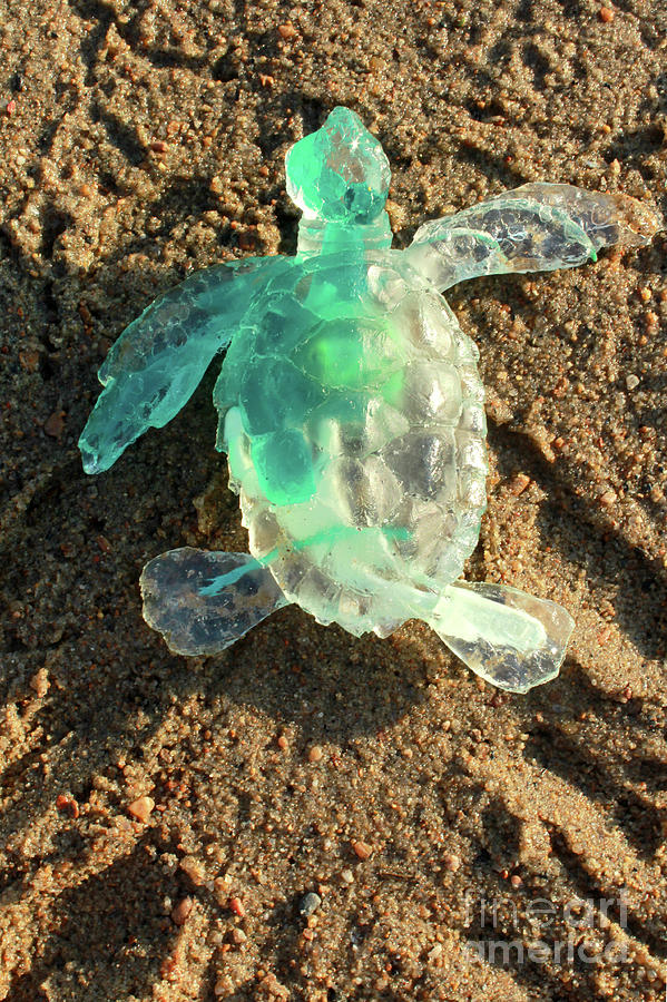 Green Baby Sea Turtle From The Feral Plastic Series By Adam Long Sculpture