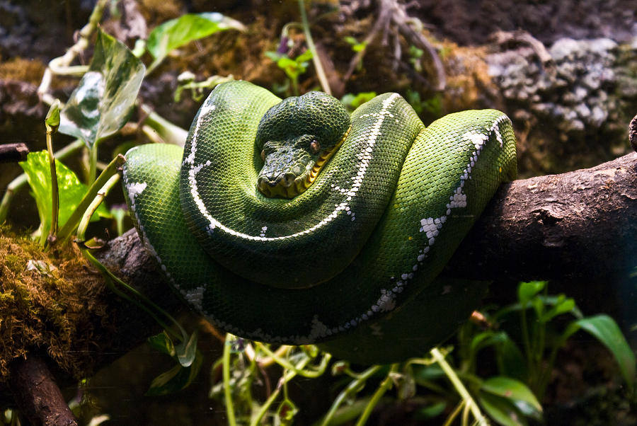 Green Photograph - Green Boa by Douglas Barnett