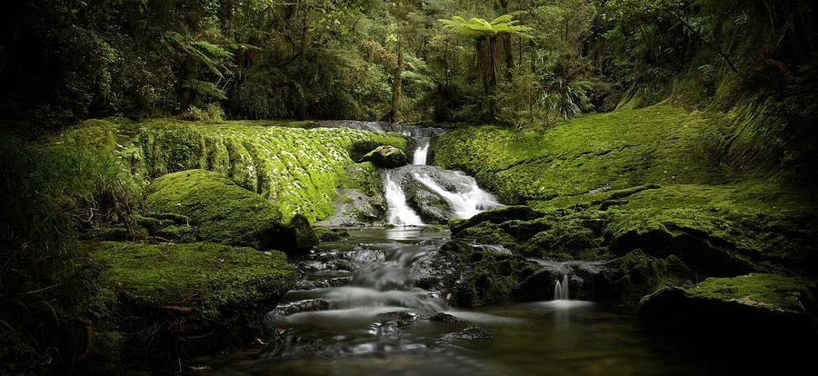 Tree Ferns Photograph - Green Cascade by Peter Prue