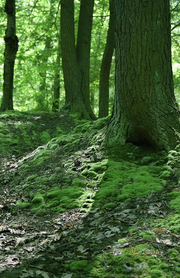 Green by Chris Busch